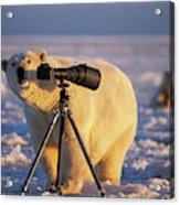 Polar Bear Investigating Photographers Acrylic Print