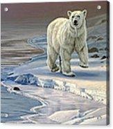 Polar Bear On Icy Shore    Acrylic Print