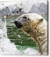 Polar Splash Acrylic Print