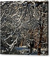 Polar Vortex Beauty Acrylic Print