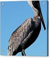 Pole With Pelican  Acrylic Print