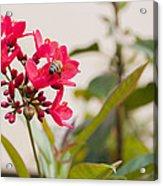Polen Gathering Bee Acrylic Print