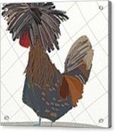 Polish Chicken Acrylic Print