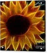 Polka Dot Glowing Sunflower Acrylic Print