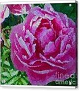 Polka Dot Pink Peony Acrylic Print