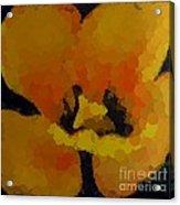 Polka Dot Yellow Blooming Tulip Acrylic Print