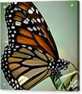 Polka Dots And Wings Acrylic Print