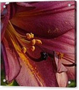 Pollen Dust Acrylic Print