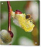 Pollen Feast Acrylic Print