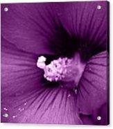 Pollenize Me Acrylic Print