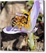 Pollinated Acrylic Print
