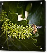 Pollination Acrylic Print by John Monteath
