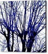 Vessels Of Blue Acrylic Print
