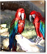 Polly And Pauly Acrylic Print