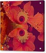 Polyanthus Spiral Acrylic Print by Nancy Pauling