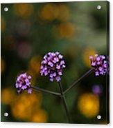Pom Pom Plant Acrylic Print