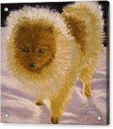 Pom Pom Pup Acrylic Print