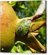 Pomegranate Bug Jewel Case Acrylic Print