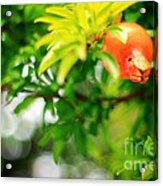 Pomegranate On A Tree Acrylic Print