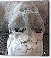 Pompeii Ash Skeleton Acrylic Print by Gregory Dyer