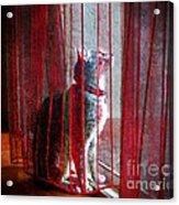 Poncho Watching It Rain Acrylic Print