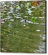 Pond 4 Acrylic Print