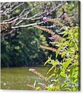 Pond At Norfolk Botanical Garden 12 Acrylic Print
