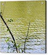 Pond At Norfolk Botanical Garden 8 Acrylic Print