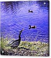 Pond Days Acrylic Print