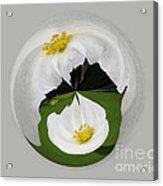 Pond Flower Orb Acrylic Print