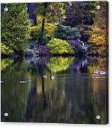 Pond In The Park Oil Paint  2721gop   Acrylic Print
