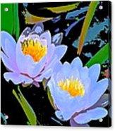 Pond Lily 17 Acrylic Print
