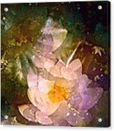 Pond Lily 23 Acrylic Print