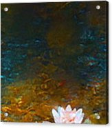 Pond Lily 27 Acrylic Print