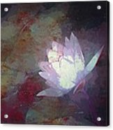 Pond Lily 32 Acrylic Print
