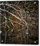 Pond Of Reflection Acrylic Print