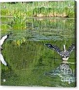 Pond Pairs Dancing Acrylic Print