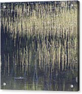 Pond Reflections Acrylic Print