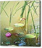 Pond  Reflections Acrylic Print by Elmer Baez