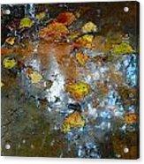 Pond Scum Acrylic Print