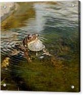 Pond Song Acrylic Print