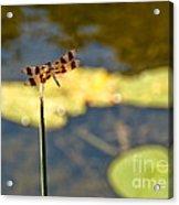 Pond Visitor Acrylic Print