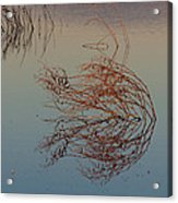 Pond Weed Reflections Acrylic Print