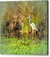 Pond Wildlife Acrylic Print