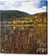 Pond With Autumn Foliage  Acrylic Print