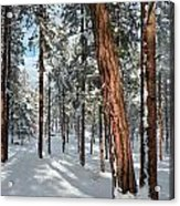 Ponderosa Winter Acrylic Print