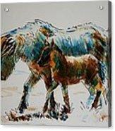 Pony And Foal Acrylic Print