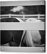 Pony Farm 2011 Acrylic Print
