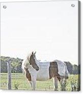Pony Pride Acrylic Print