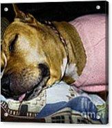 Pooped Pup Acrylic Print